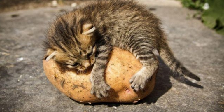 Любите ли вы картошку так, как люблю её я?!